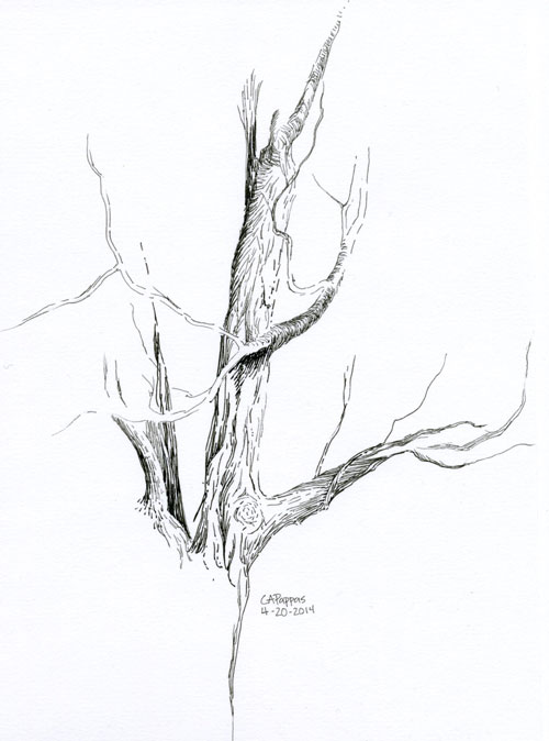 pen and ink tree sketch