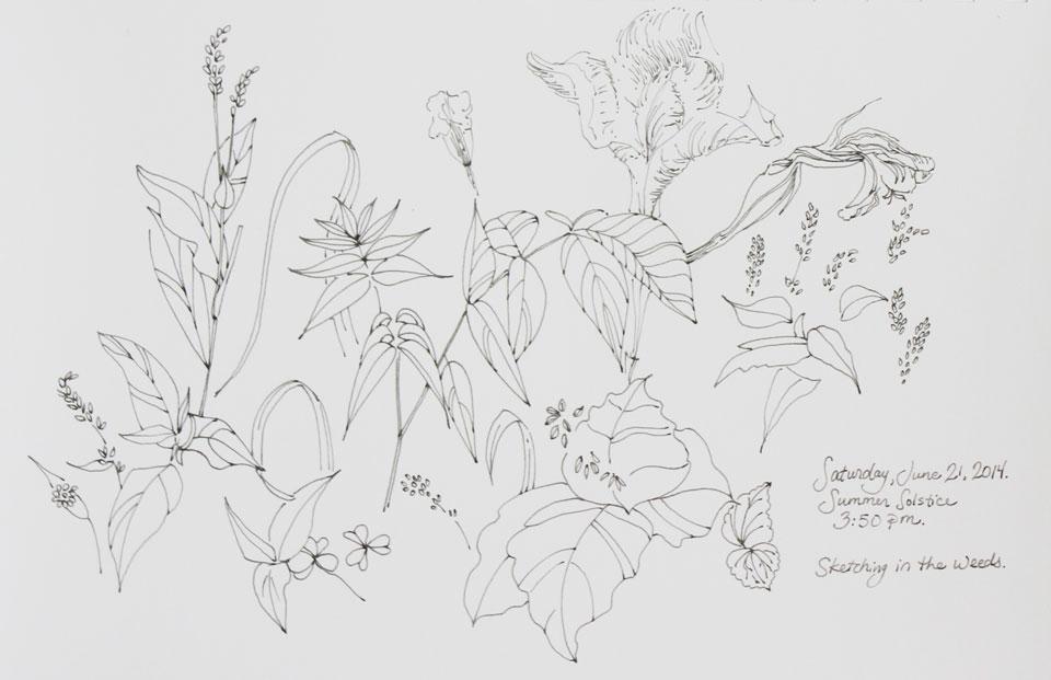 ink sketch weeds
