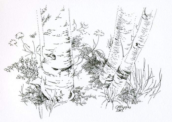 birch tree ink sketch