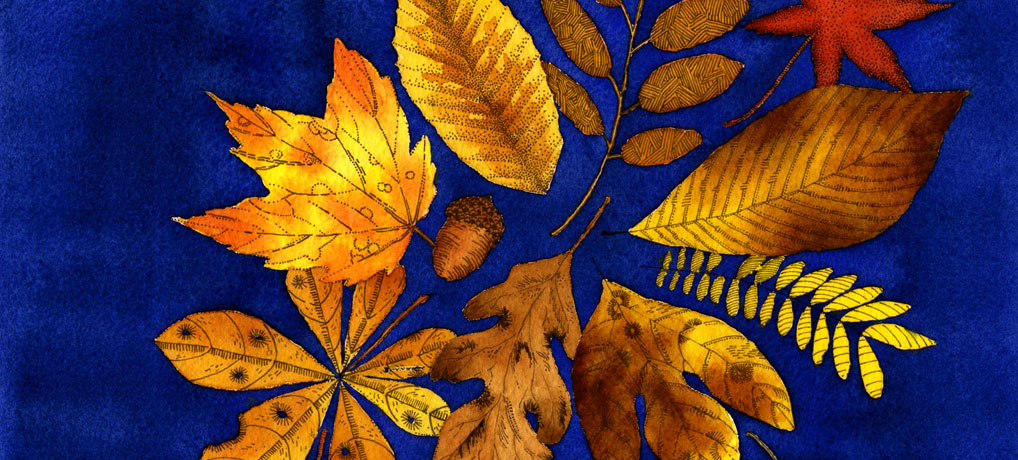 leaves-on-blue-1018x460px-2