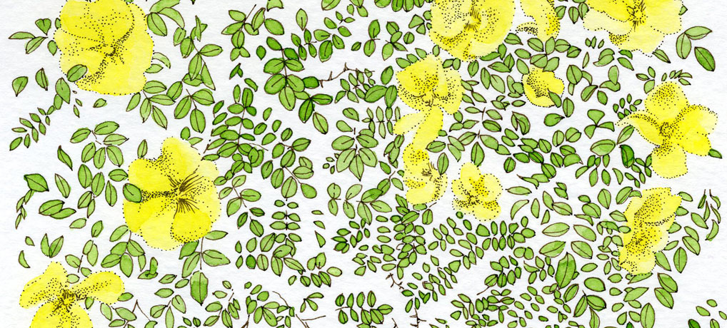 yellow-blossoms-1018x460px
