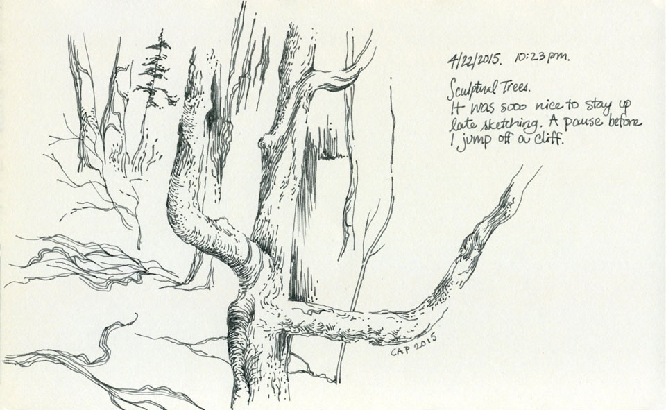 Tree Sketch by Carolyn A Pappas