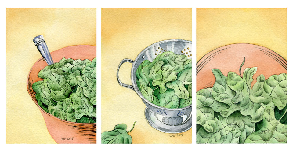 Spinach Illustration by Carolyn A Pappas