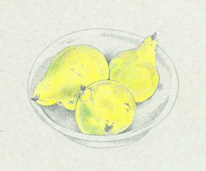 Pears in a Bowl by Carolyn A Pappas