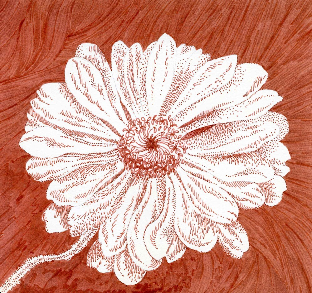 zinnia drawing by Carolyn A Pappas