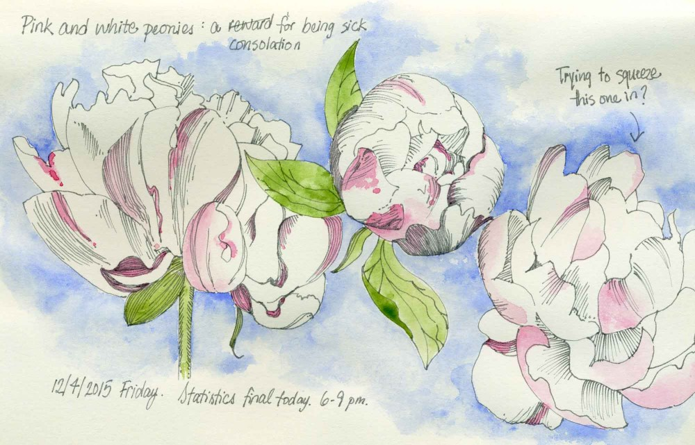 Peonies drawing by Carolyn A Pappas
