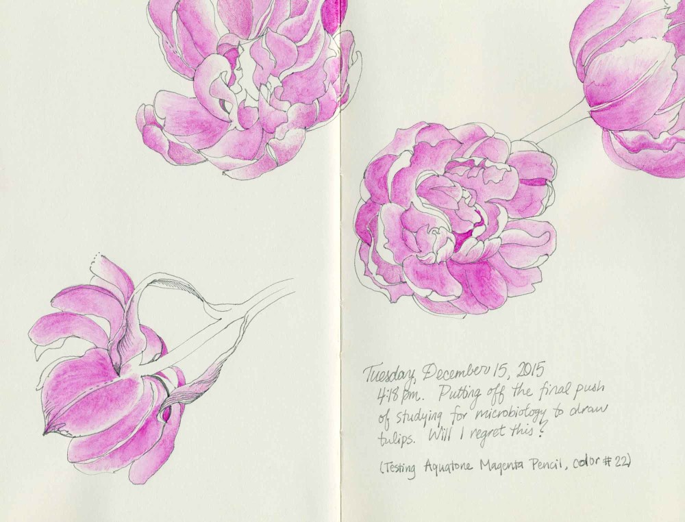 Tulips drawing by Carolyn A Pappas