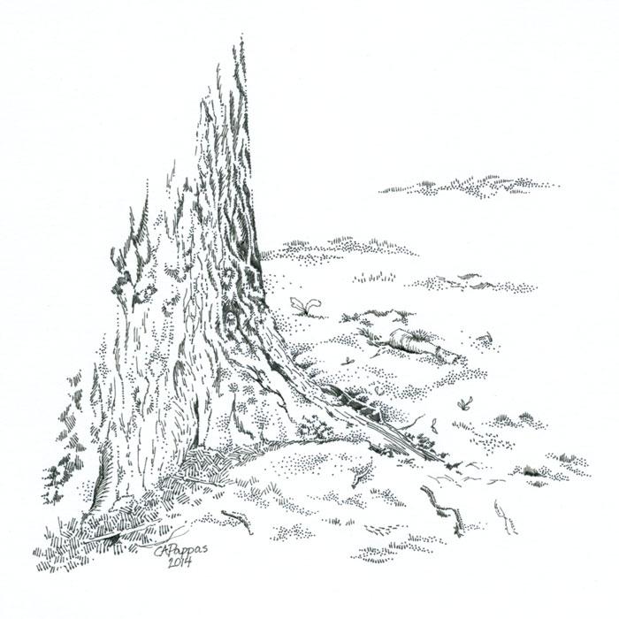 oak tree trunk drawing