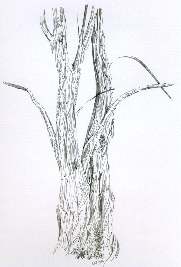 Special Tree (5-3-14)