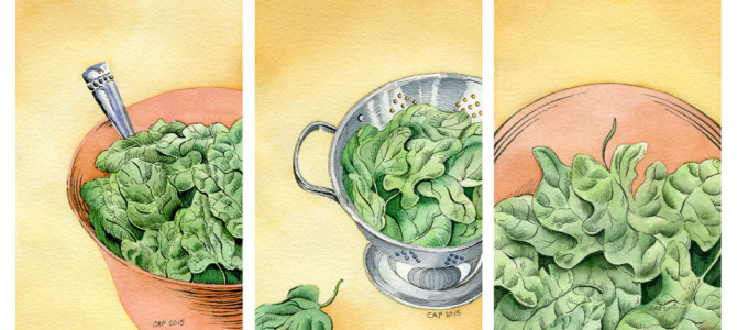 Spinach Illustrations