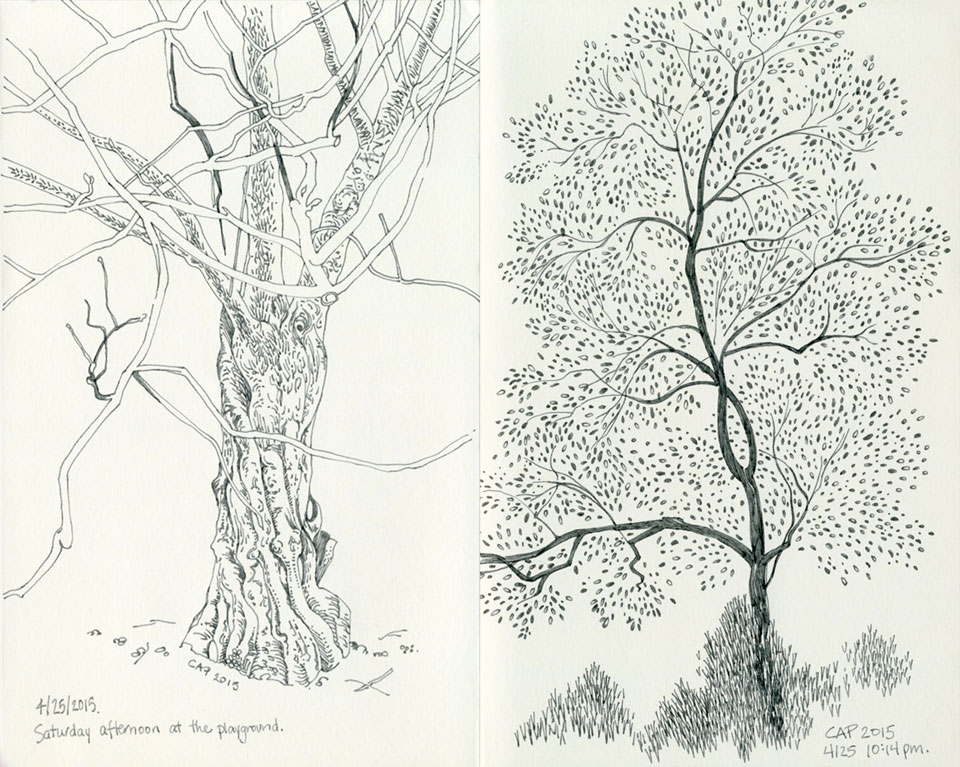 Tree Sketches by Carolyn A Pappas