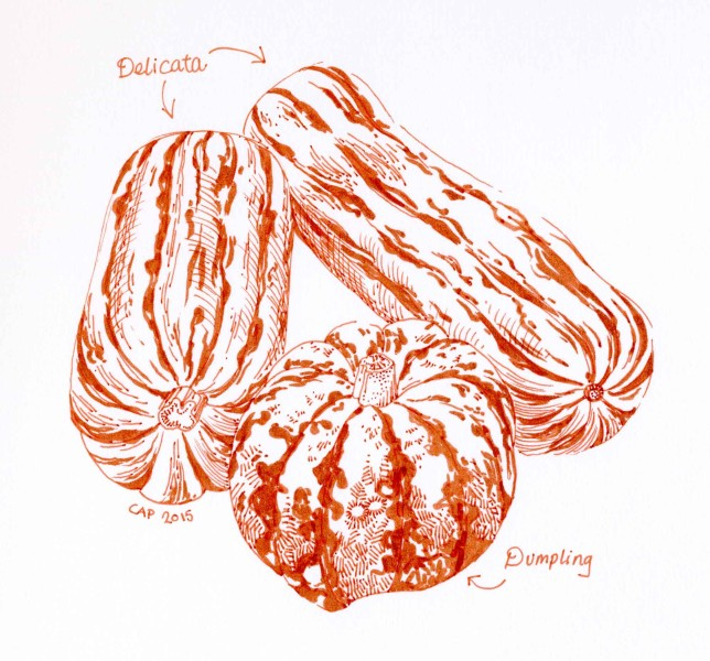 Squash Varieties drawing by Carolyn A Pappas