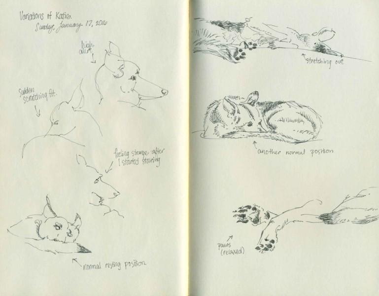 German Shepherd dog sketches