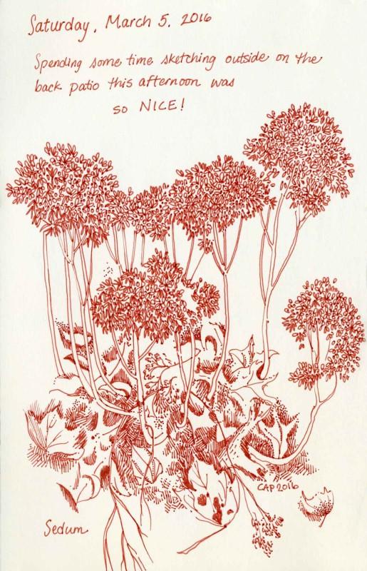 sedum garden sketch