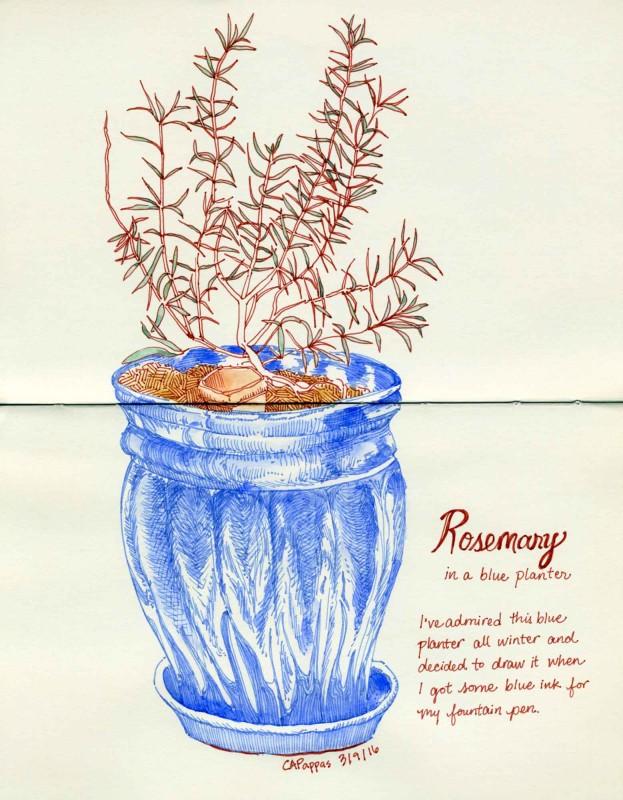 rosemary sketch