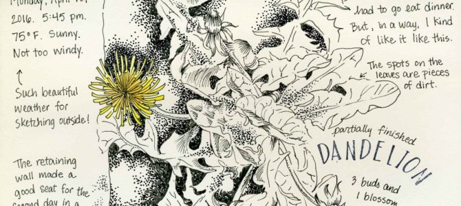 One Year Ago Today: Sketching a Dandelion