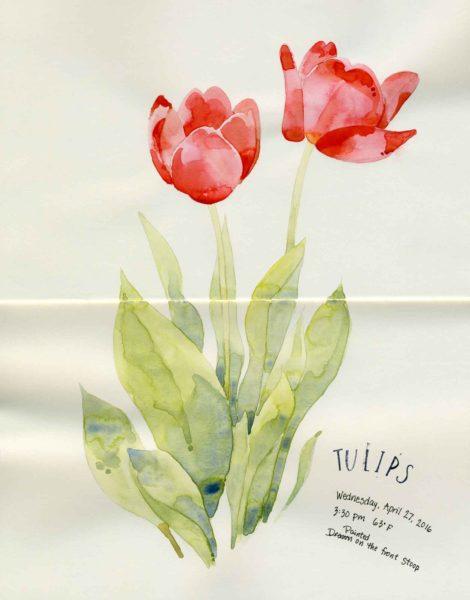 watercolor tulips sketch