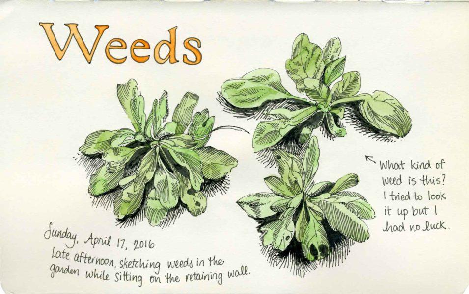 weeds sketch