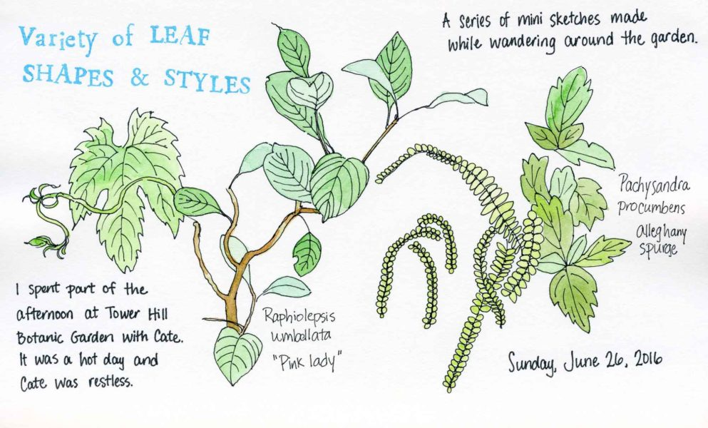 leaf shapes sketch