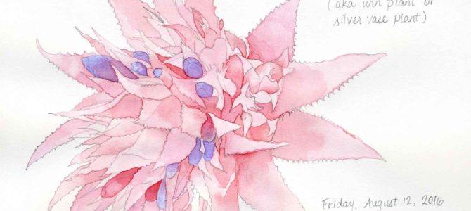 Selection of Pink Watercolor Flowers