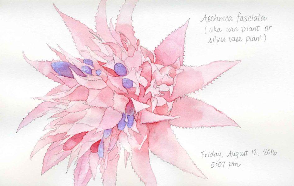 aechmea fasciata painting
