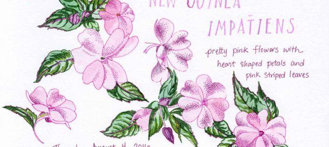 One Year Ago Today: New Guinea Impatiens