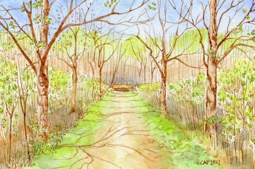 tree lined path drawing