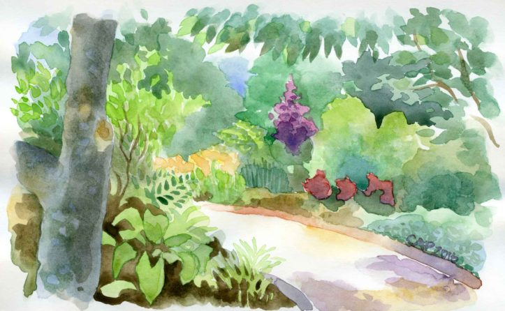 watercolor garden sketch