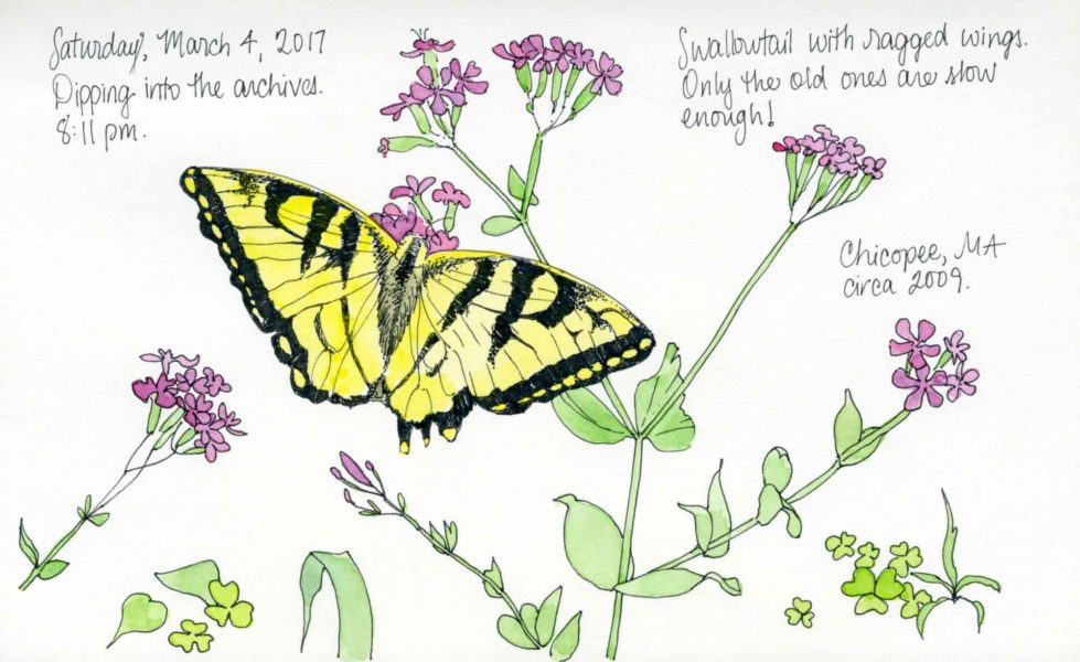 swallowtail butterfly sketch