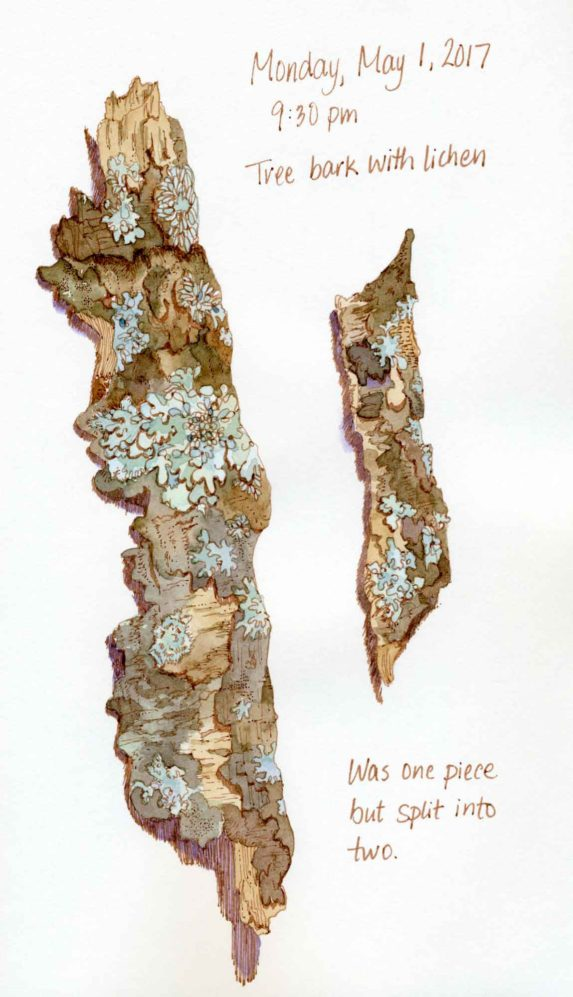 tree bark lichen sketch