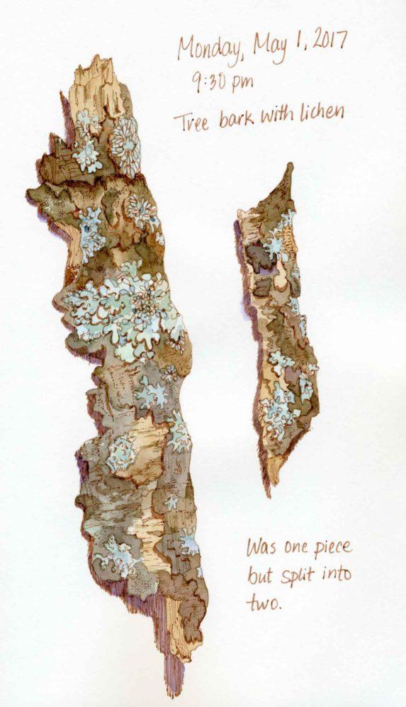 tree bark lichen sketch