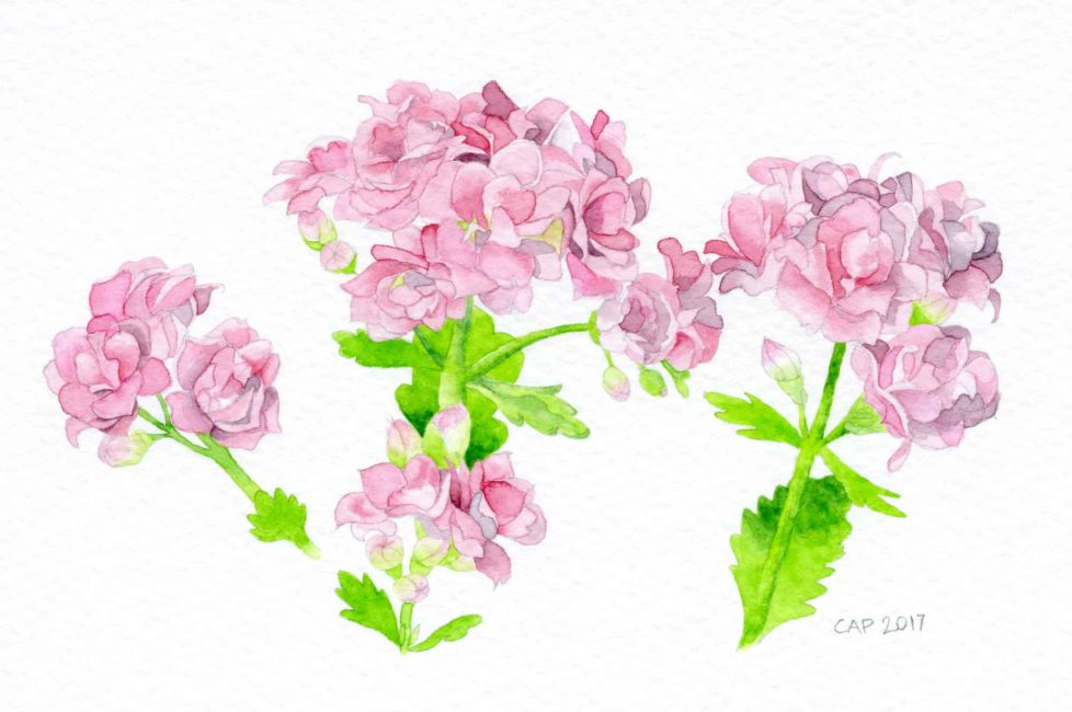 kolanchoe watercolor painting