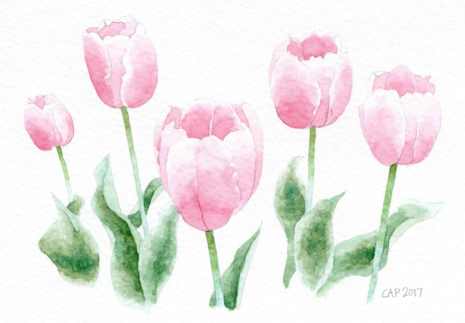 tulips watercolor painting