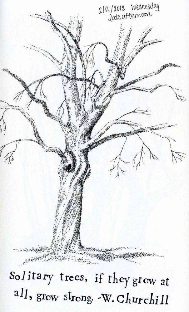 pen and ink tree sketch drawing