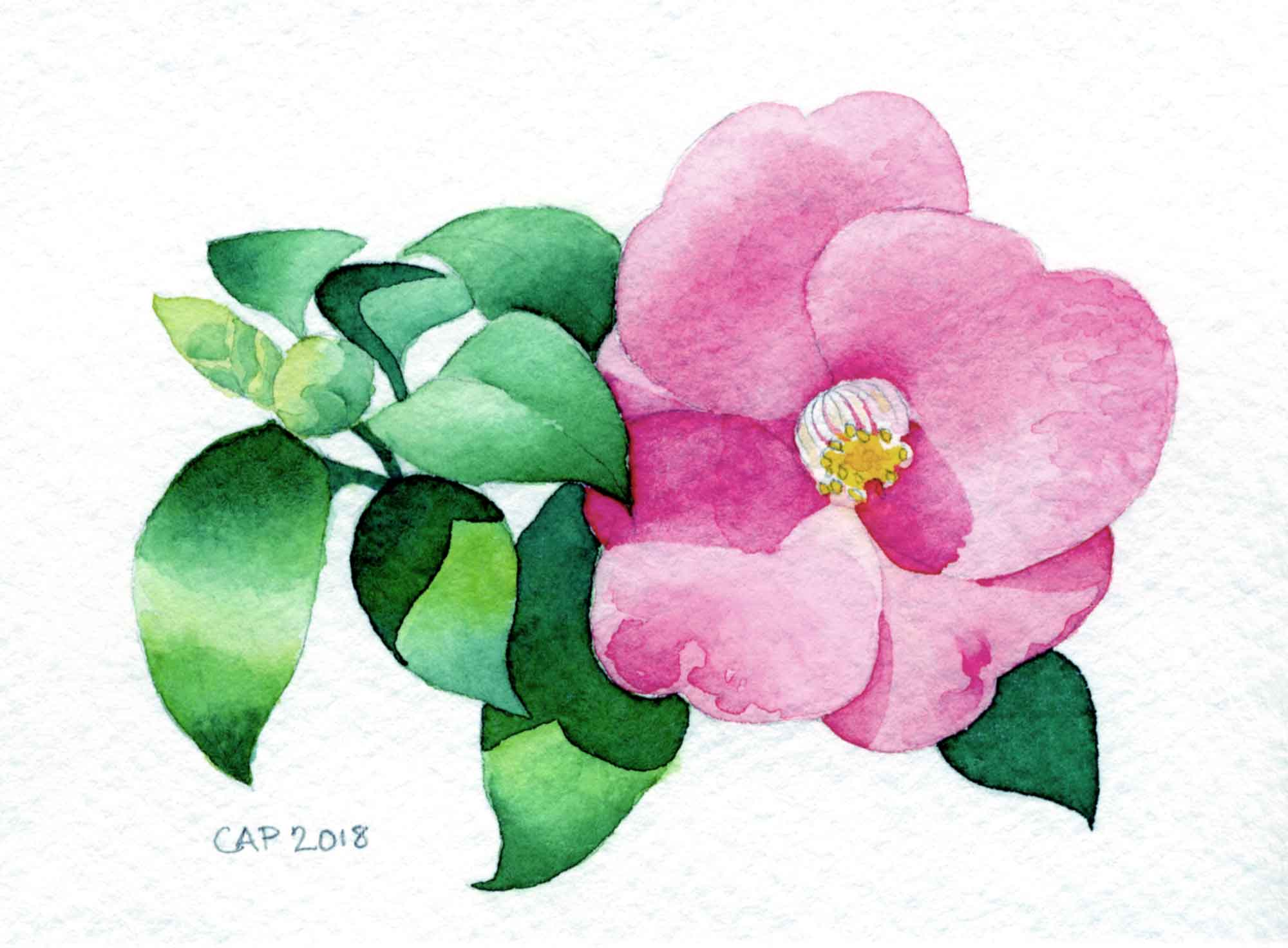 camellia watercolor painting