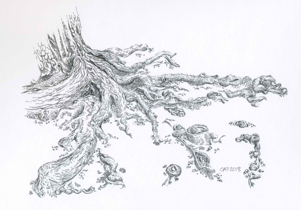 pen and ink tree roots