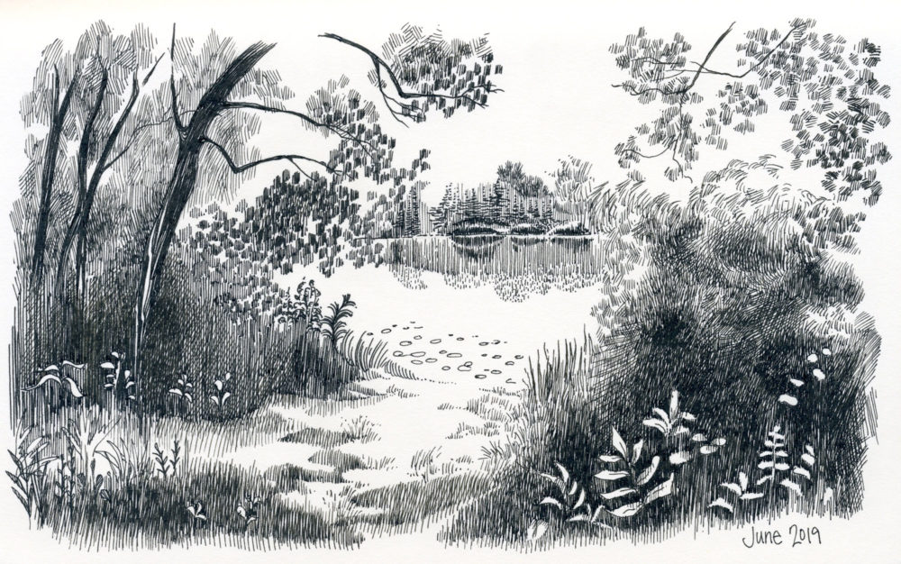 pen and ink landscape pond