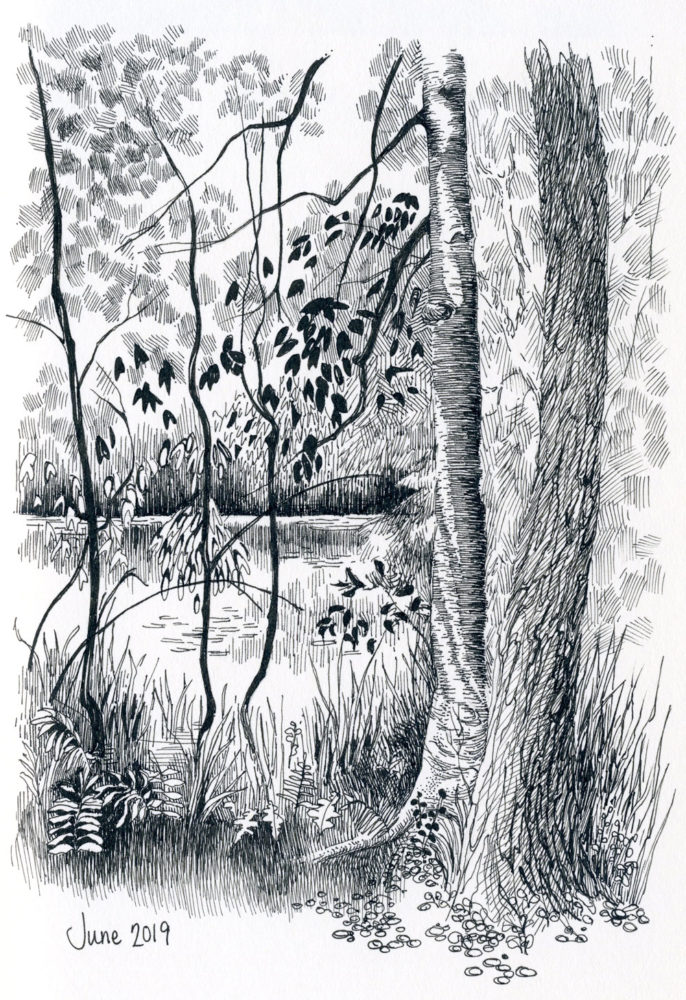 pen and ink landscape pond trees