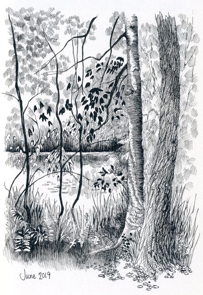 pen and ink landscape pond trees