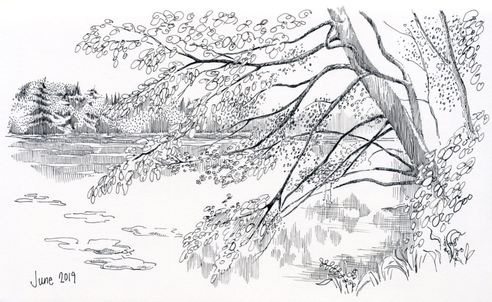 pen and ink landscape lake pond tree