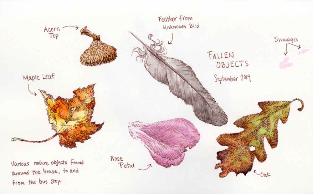 small nature objects sketch