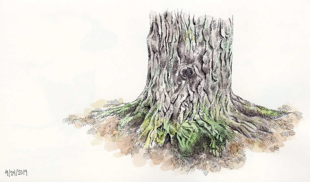 pen and ink watercolor tree